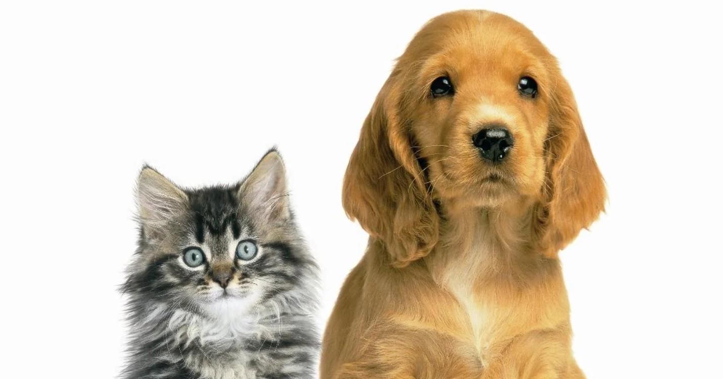 Les chats et chiens officiellement plus comestibles, réouverture des marchés controversé de Wuhan