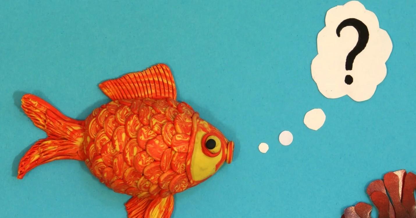 Le syndrome du poisson rouge