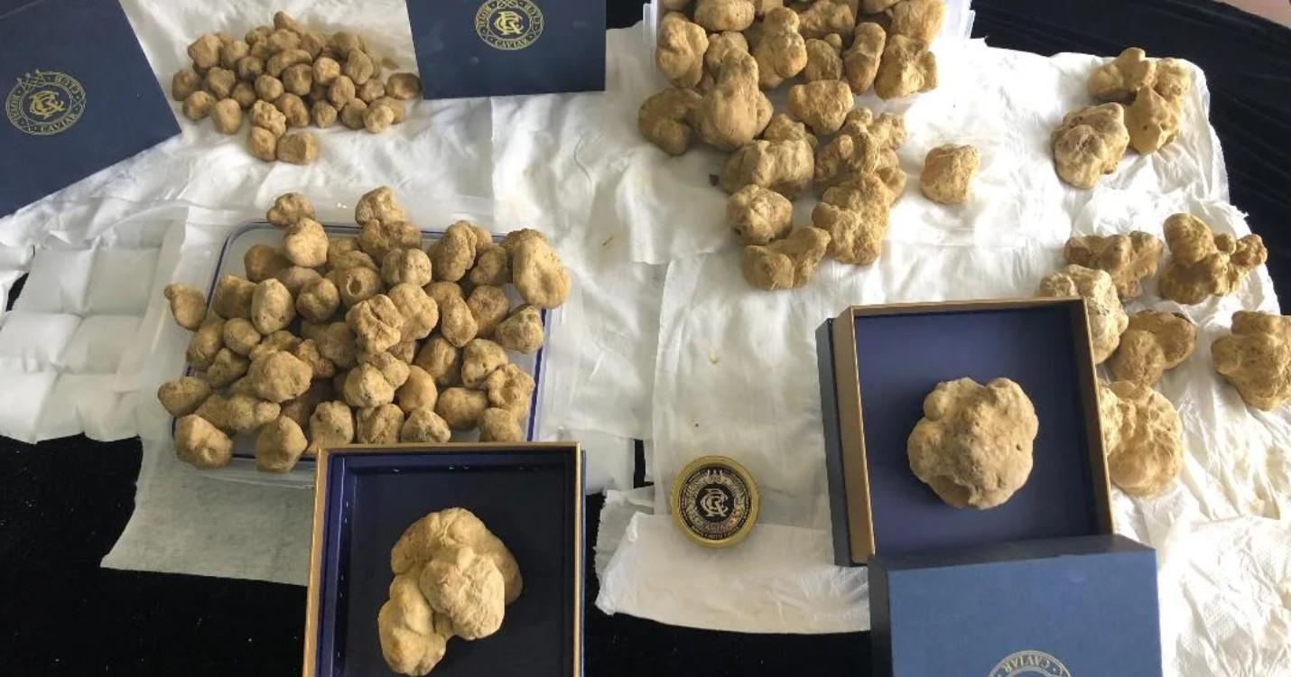 Les truffes blanches arrivent à Hong Kong