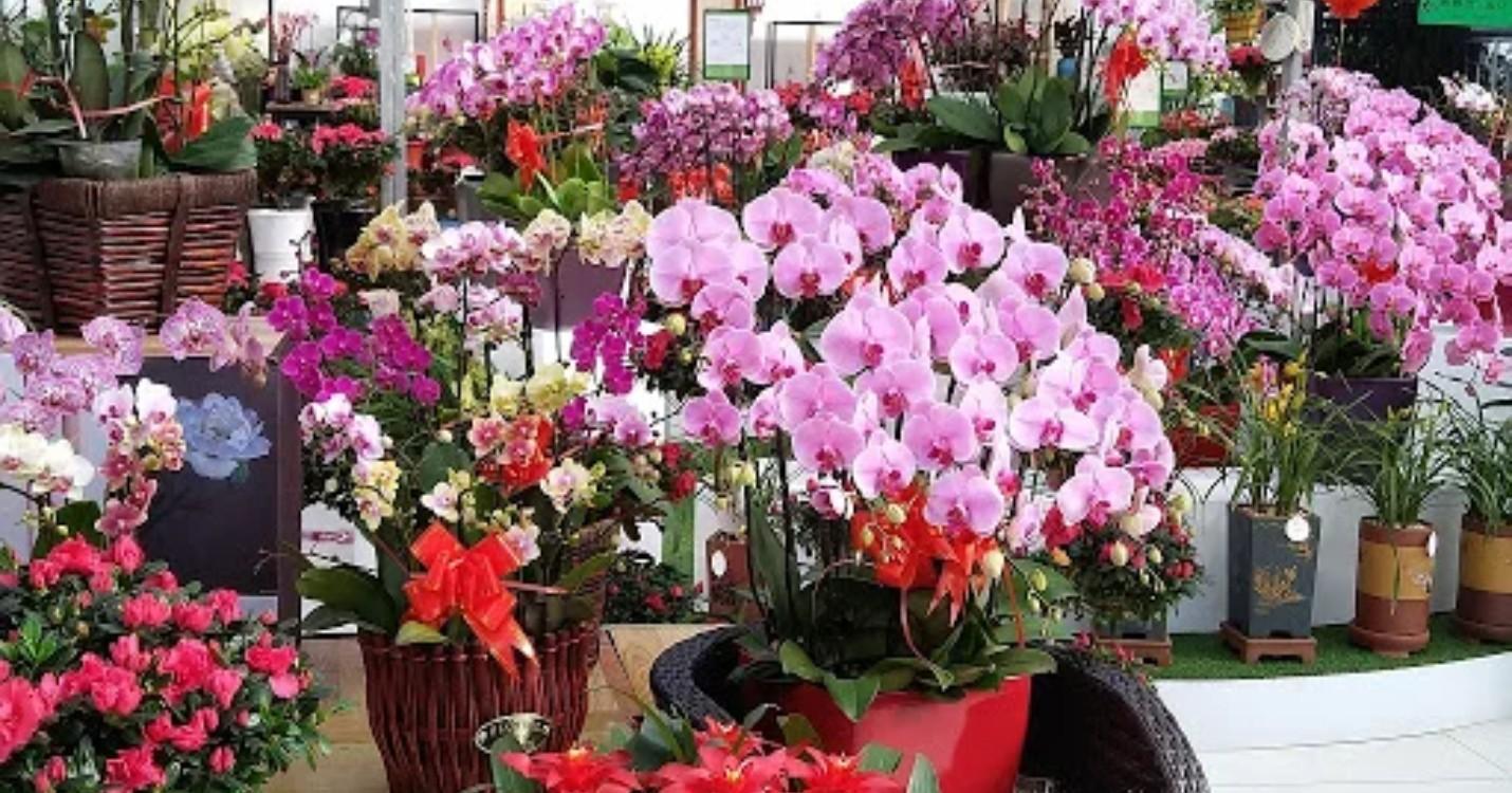 Le marché aux fleurs se tiendra bien, l'université de Macao fête ses 40 ans