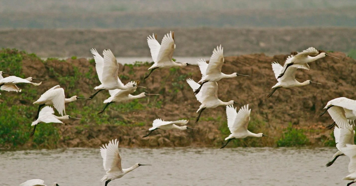 Les oiseaux migrateurs quittent Hong Kong