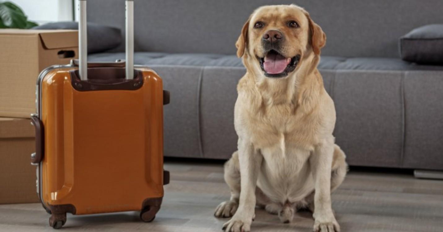 Journée mondiale du Chien : Comment s'expatrier avec son chien ?
