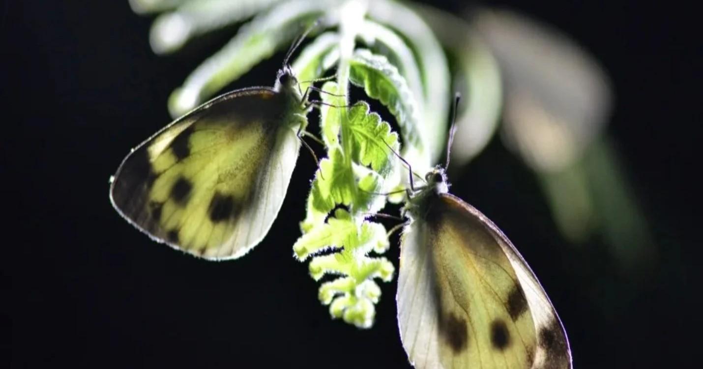 La Fung Yuen Butterfly Reserve