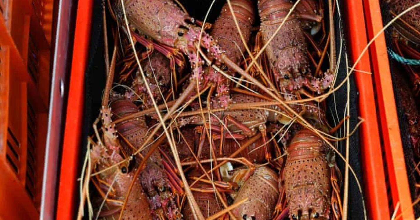Importations illégales de homard australien, les propos de Joe Biden démentis par le Pentagone